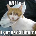 Wi-Fi Cat