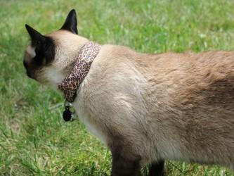 cat-hack-02-660x495
